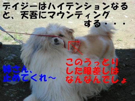 CIMG0537.jpg