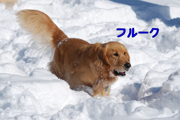 2014 01 02 (7)