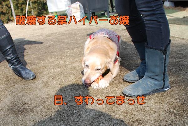 2014 01 11 (4)