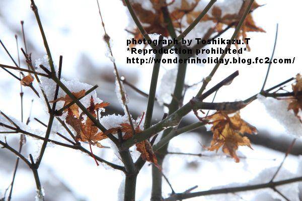 IMG_8106s.jpg