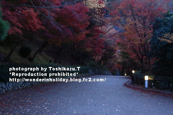 IMG_8877s.jpg
