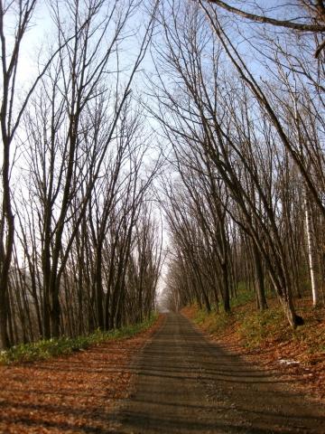 森の道1117
