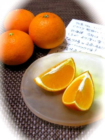 べっぴんオレンジ1226