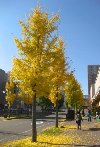 北広島駅周辺1023