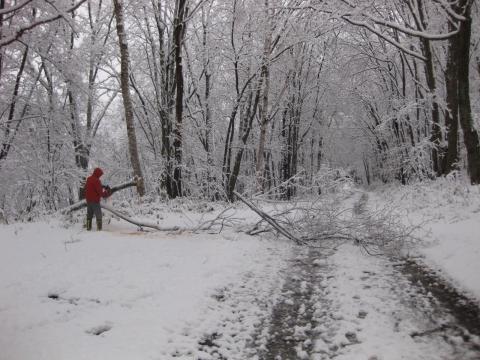 木を切る10291