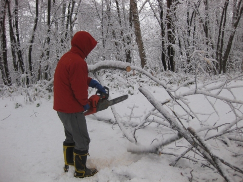 木を切る1029