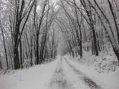 森の道1029