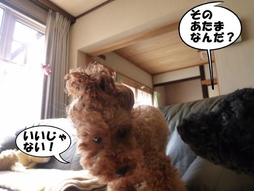 1_20100926011142.jpg