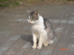 江ノ島猫2