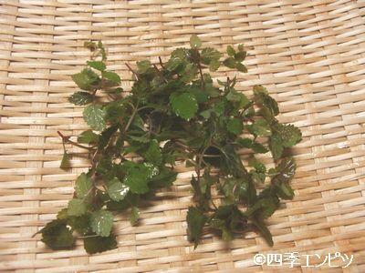 20100725 レモンバーム 収穫