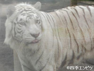 201008 東武動物公園 29