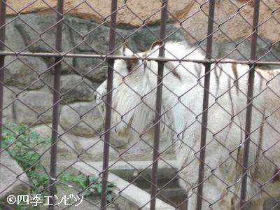 201008 東武動物公園 28