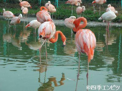 201008 東武動物公園 30
