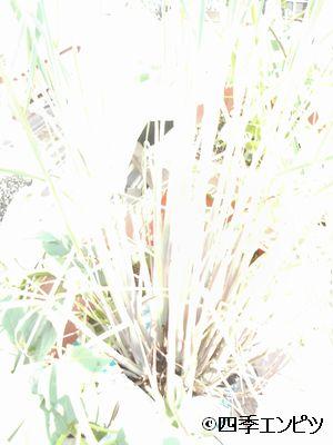 20100911 レモングラス