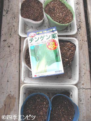 20101016 チンゲンサイ 種蒔き