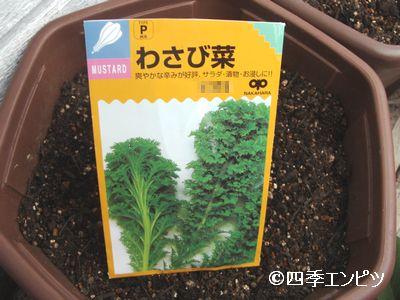 20101024 わさび菜 種蒔き