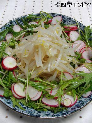 201101 もやしと水菜とラディッシュなどのサラダ