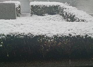 snow@20131220.jpg
