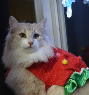 Merry Christmas ♪