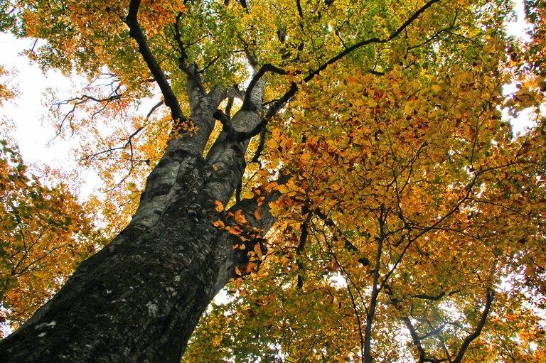20101025-森の神