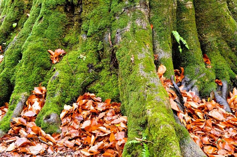 20101111-森の神