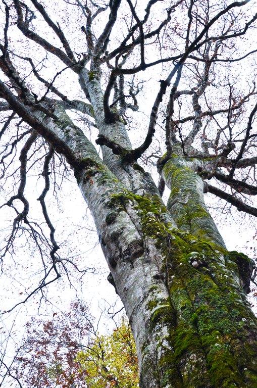 20101111-森の神 冬枯れ
