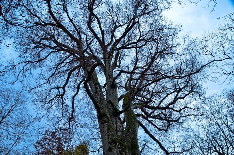 20101111-森の神 蒼い空