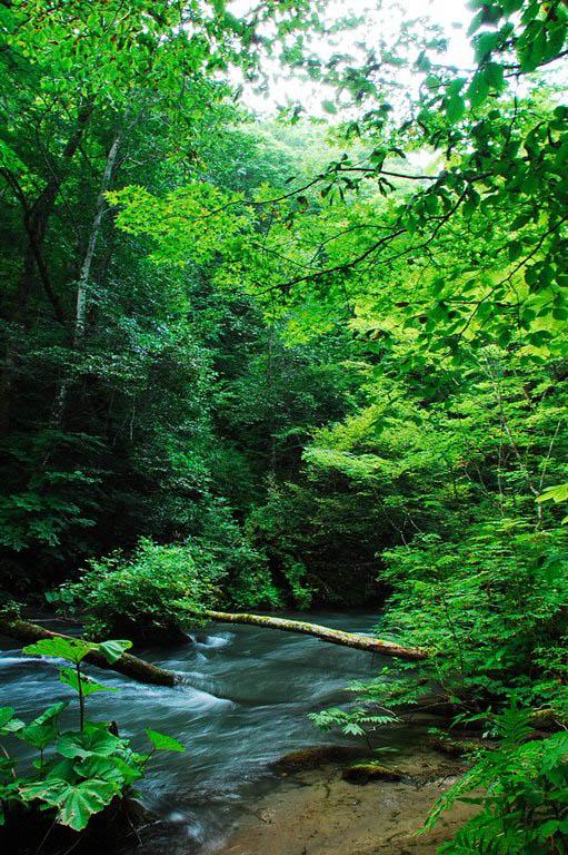 20100826-奥入瀬渓流
