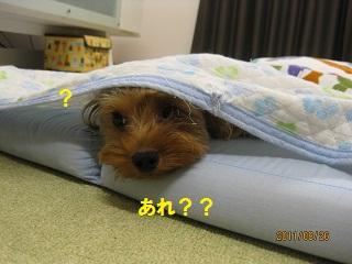 かくれんぼ?2