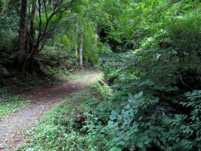 「三の滝」への道