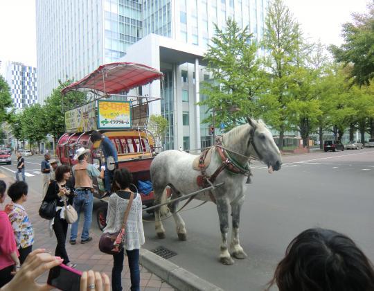 道庁前の馬車