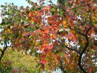 s秋の景色と富多小 005
