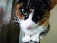 s猫さん~1