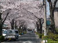 s2012桜 002