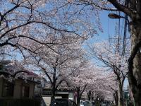 s2012桜 001