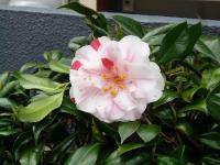 s連休の花 004