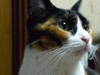 sお猫さん 002