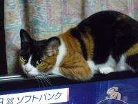 sお猫さん 001