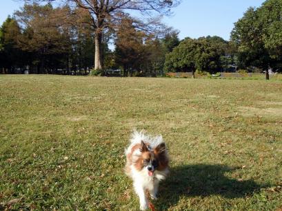 懐かしい公園♪4