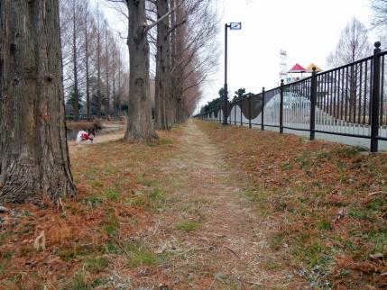 いつもの公園でいつもと違う道3