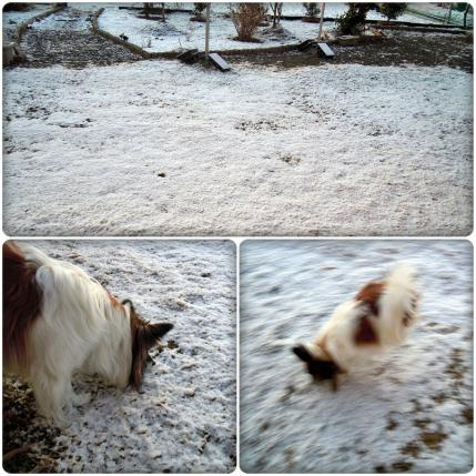 雪だぁ。゚゚。゚。ヾ1