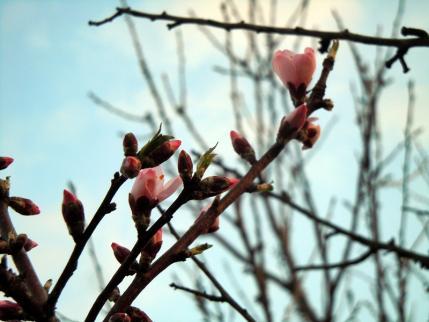 春!!見っけたっ♪4