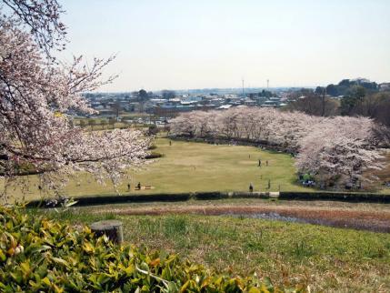 さきたま古墳公園と多々良沼公園の桜☆4