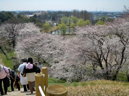さきたま古墳公園と多々良沼公園の桜☆7
