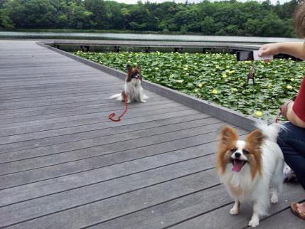 上野沼でデ~ト♪4