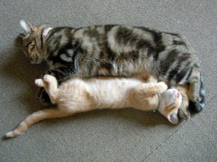 暑い…^^; 寝姿2