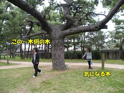 DSCF0432-1.jpg