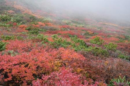 67紅葉の森
