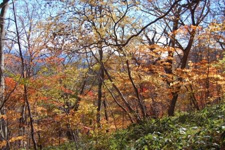 26ヤシオの森