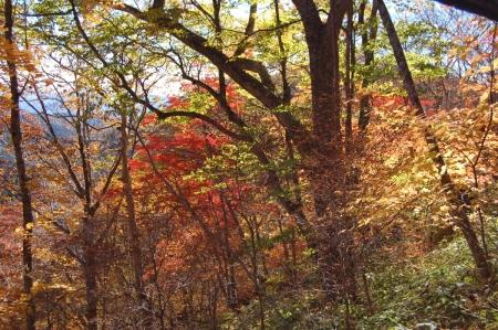 27ヤシオの森